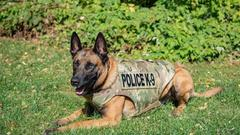 Cover for Lebanon Police: K-9 and officers hit by unruly man