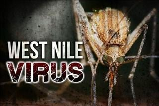 Picture for Bird found with West Nile virus in Tazewell County