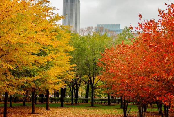 Picture for Autumn Equinox 2021: Timing, Weather and More for First Day of Fall in Illinois