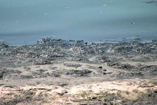 Picture for Stony Brook professor: Foul smell off Great South Bay could be dangerous in large amounts