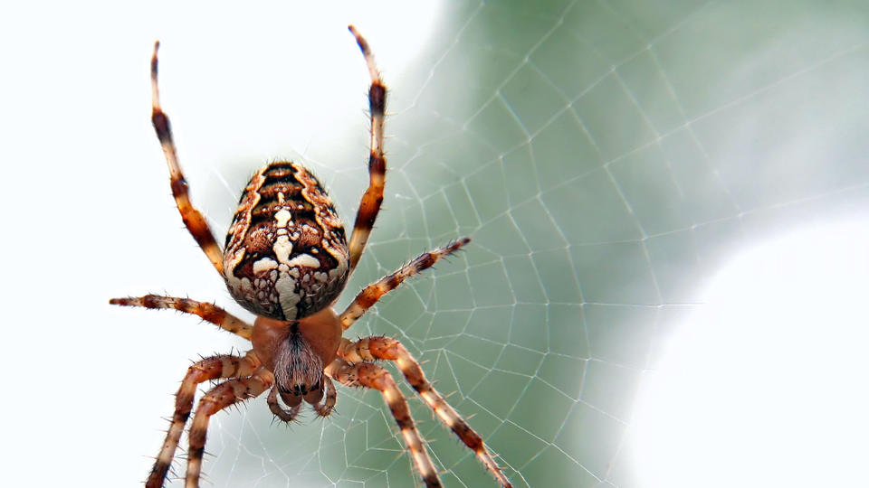 Picture for The Most Dangerous Animals in Ohio: 6 Creatures You Should Definitely Stay Away From