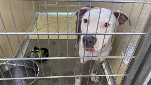 Humane Society Of Tampa Bay Taking Care Of Dog Said To Have Been Thrown From A Truck News Break