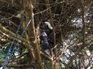 Picture for Mama bear and three cubs rescued from Ilwaco neighborhood