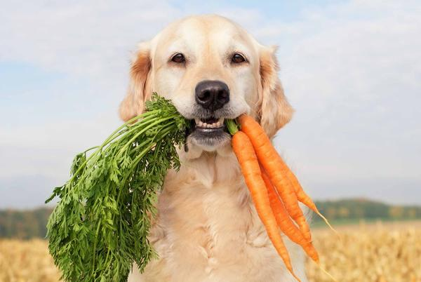 Picture for Dog owners could face jail, $27,000 fines for putting pets on vegetarian diet