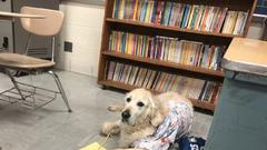 Cover for Buster the therapy dog remembered as peanut butter-loving family member at Swartz Creek schools