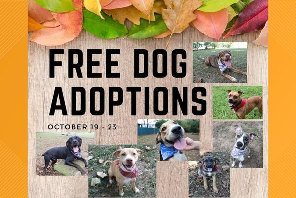 Picture for Fayetteville Animal Services waiving adoption fees for dogs