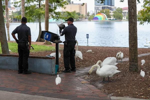 Picture for How Lake Eola's swans became a symbol of Orlando