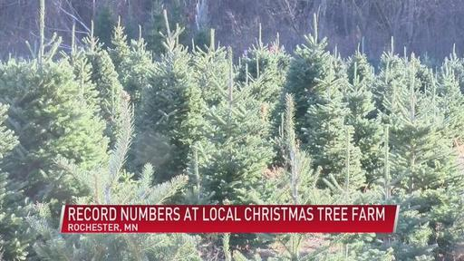 Best Places To Buy Christmas Trees Cbs Pittsburgh