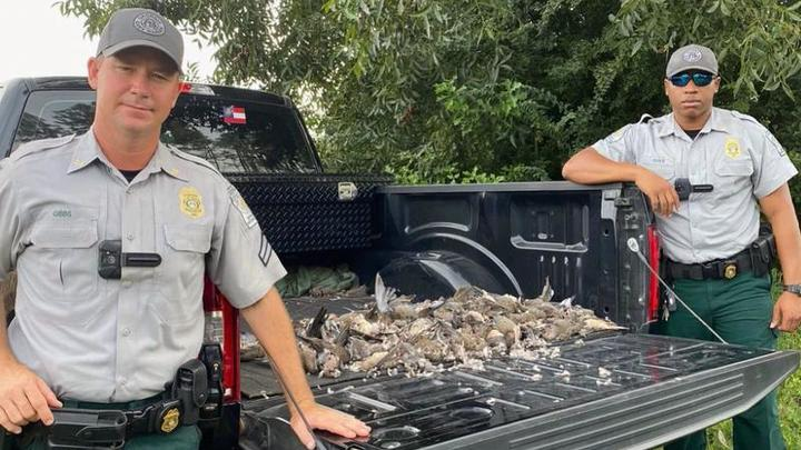 Cover for Georgia DNR confiscates 150+ baited doves from hunters
