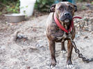 Picture for Lincoln County citizen asks board to protect pets, prosecute abusers