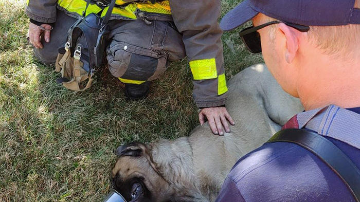 Cover for Firefighter Adopts a Dog Who He Saved From an Apartment Fire
