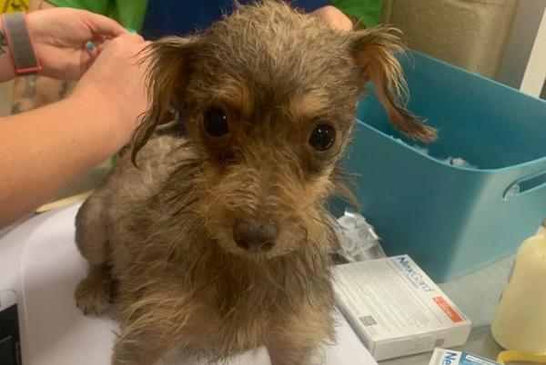 Picture for Mesquite Animal Services rescues over 100 dogs from one home