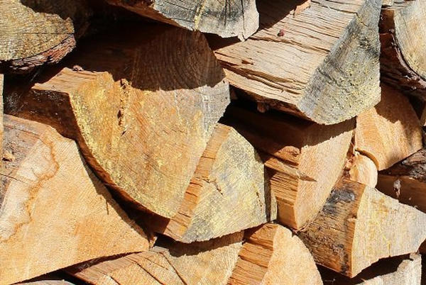 Picture for Firewood permits for personal use free as of Oct. 1 on Willamette, Umpqua, Siuslaw forests