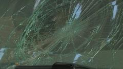 Cover for Bear hit, killed on I-20 in Bolton Wednesday night, police say
