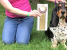 Picture for Steuben County woman and basset hound compete in Westminster Kennel Club Dog Show