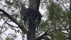 Cover for Fisherman Spots Very Bizarre 'Thing' In Tree While Out In Basin [PHOTOS]
