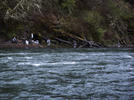 Picture for Guest Commentary: Finding Solutions for Restoring Cowlitz River Fisheries