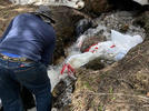 Picture for Man Caught Dumping Human Waste In Colorado High Mountain Stream