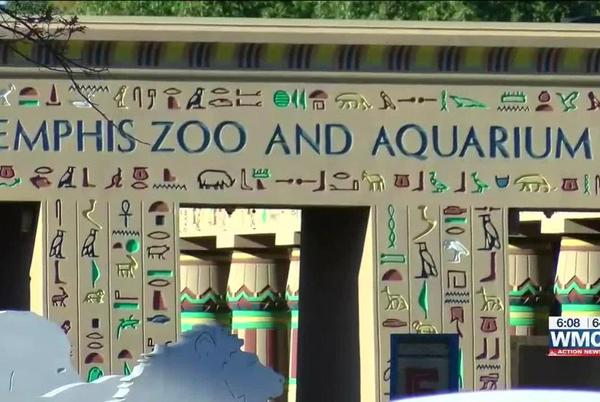 Picture for Memphis Zoo animals may soon get COVID-19 vaccine