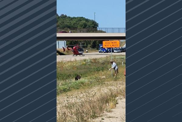Picture for All lanes open at Williams Dr. following I-39/90 crash