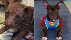 Cover for Fresno County puppy who grew into beautiful superhero looking for forever home