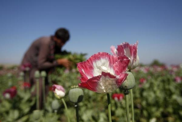 Picture for India seizes $2.7 billion Afghan heroin haul amid Kabul takeover chaos