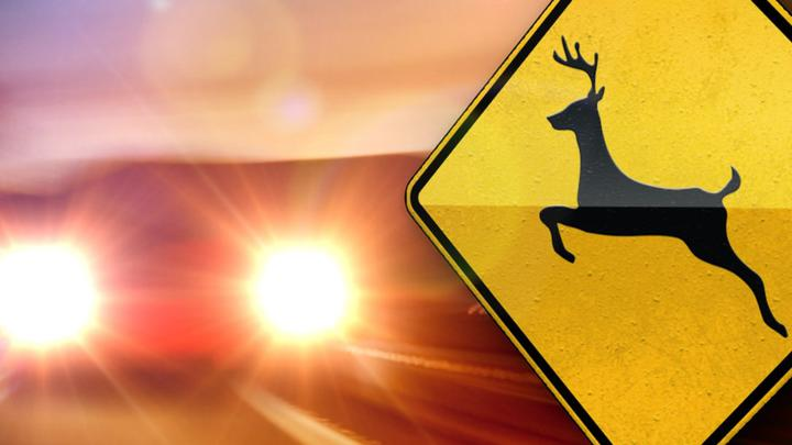 Cover for Two hurt when motorcycle hits deer in Linn County