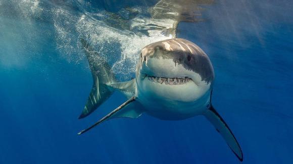 Cover for Miami daily roundup: Great white off Florida's coast, Palm Bay to ban ventanitas, and SOBE's 2 a.m. last call