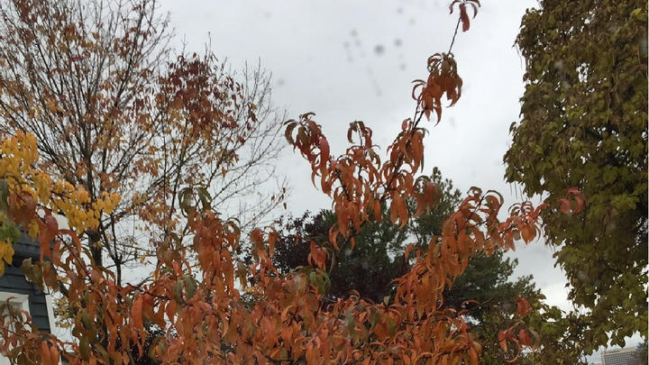 Cover for Winter Is on Its Way, and the Leaves Are Falling