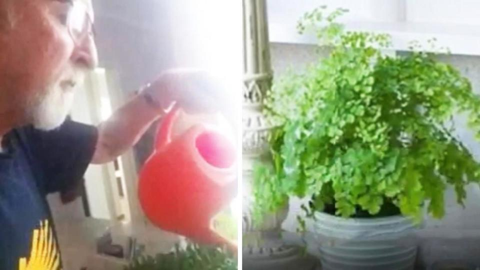 Wife Instructs Husband to Keep Watering Plants Before She Died. Years Later, He Finds Out Funny Reason Why