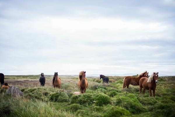 Picture for Bureau of Land Management Removes Over 600 Wild Horses from Colorado