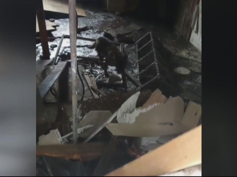 WATCH:Dog rescued from basement of abandoned home in Detroit