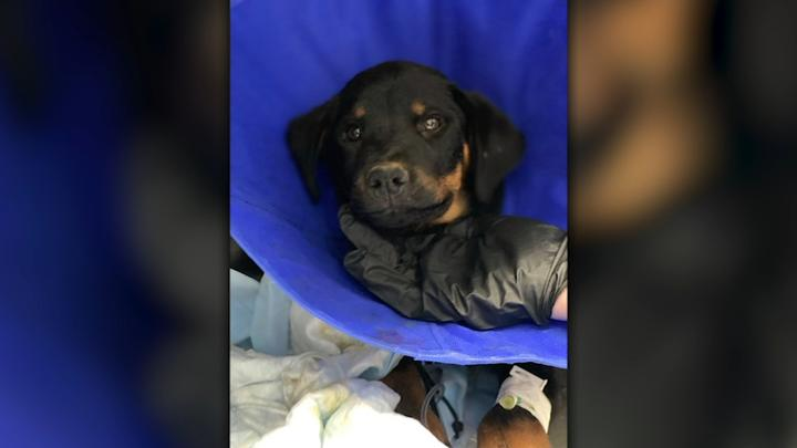 Cover for 2 dogs found in garbage bag at Fresno County park