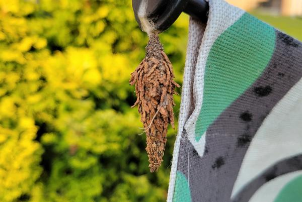 Picture for #bioPGH Blog: Bagworms