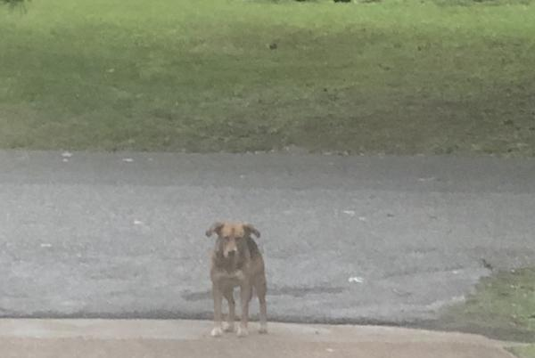 Picture for Whitehaven family in fear of pack of dogs running loose in neighborhood