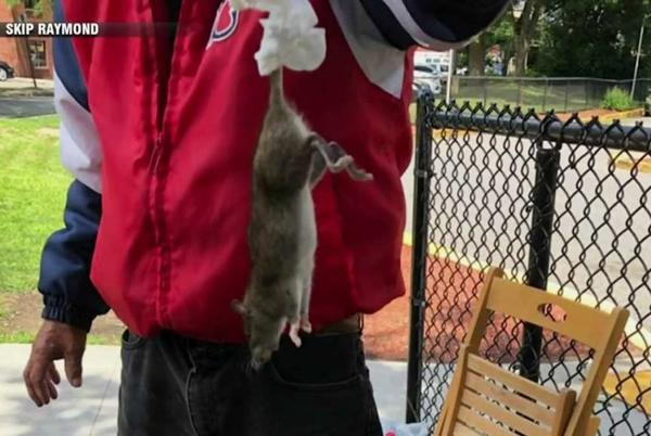 Picture for Rats! Melrose residents fed up with infestation issue