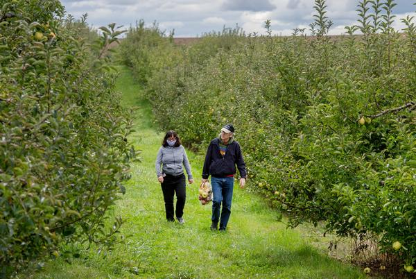 Picture for Pick your perfect apple or great pumpkin at these orchards and farms in the Peoria area