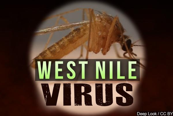 Picture for Bird found in Morton tests positive for West Nile