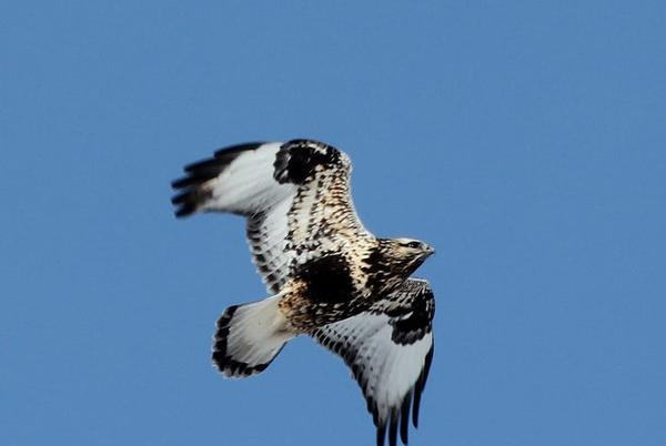 Picture for Todd Burras: Watch birds migrate at this year's High Trestle Hawk Watch