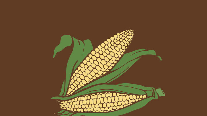 Cover for Are you ready for Corn Fest?