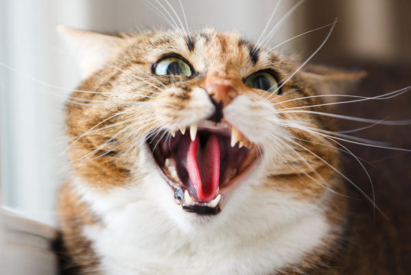 Picture for Traumatized Cat Hisses at 'Cursed' Artwork After Picking Up 'Bad Energy'