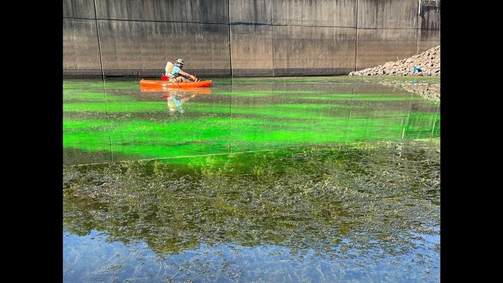 Cover for 'Funk in the river'? Here's why water in parts of Jordan Lake is a freaky green color