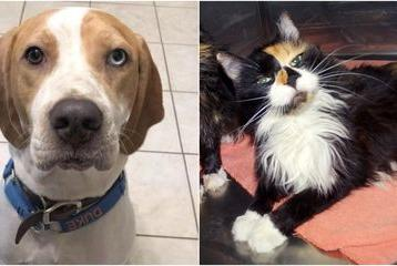 Picture for Tampa Bay area pets available for adoption