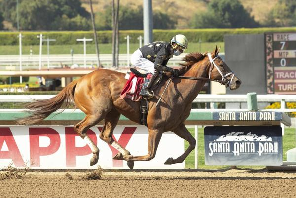 Picture for Millionaire Ce Ce heads Sunday's Grade III, $100,000 Chillingworth Stakes