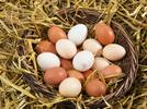 Picture for Is a brown egg healthier than a white one?