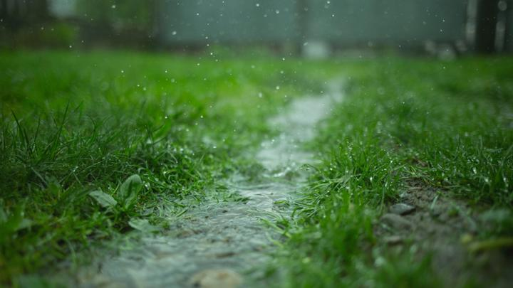 Cover for Daily Weather Forecast For Hazlehurst