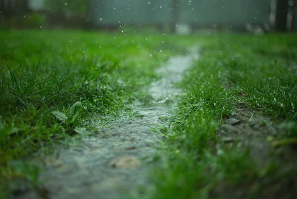Picture for Tuesday rain in Livingston: Ideas to make the most of it