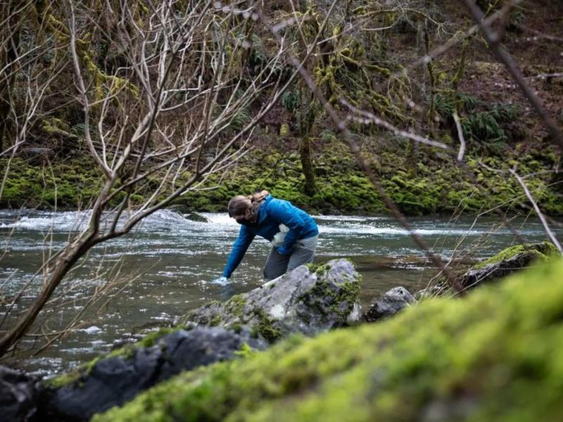 Tiny Scoops Of Water Are Unlocking Worlds Of Information About Oregon Watersheds | News Break
