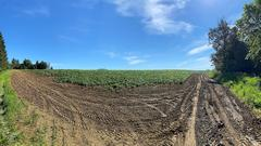 Cover for Look! It's a Beautiful day to Play in The County Potato Fields!