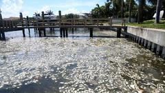 Cover for With Tampa Bay in grip of Red Tide, shrimpers turn their nets toward death